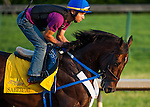 Sabercat, trained by Steve Asmussen and to be ridden by Corey Nakatani, works out in preparation for the 138th Kentucky Derby at Churchill Downs in Louisville, Kentucky on May 3, 2012