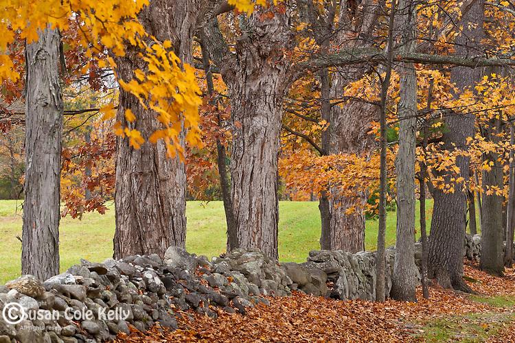 Fall foliage in Hollis, NH, USA