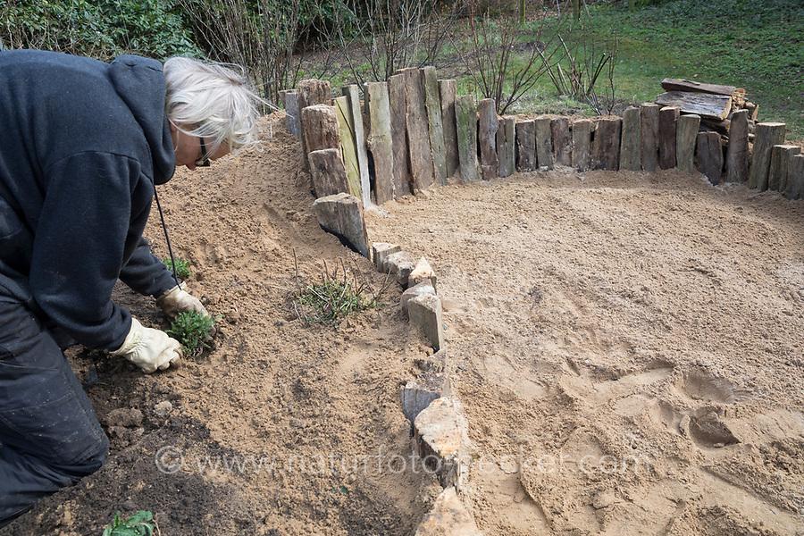 Anlage eines Sandariums im Garten, Schritt 5: an den Rand des Sandariums werden erste insektenfreundliche Pflanzen gesetzt, eingepflanzt. Sandarium, Sand, Sandfläche, Sandhaufen im Garten, Naturgarten, Nisthilfe für Wildbienen und solitäre Wespen, Lebensraum für Eidechsen, Eidechse. Soll verschiedenen Insekten als Unterschlupf, Nistplatz, und Nahrungsquelle dienen. Mehr als die Hälfte der Wildbienenarten, welche Nester bauen, nisten im Erdboden. Wildbienen-Nisthilfen, Wildbienen-Nisthilfe selbermachen, selber machen, Wildbienenhotel, Insektenhotel, Wildbienen-Hotel, Insekten-Hotel