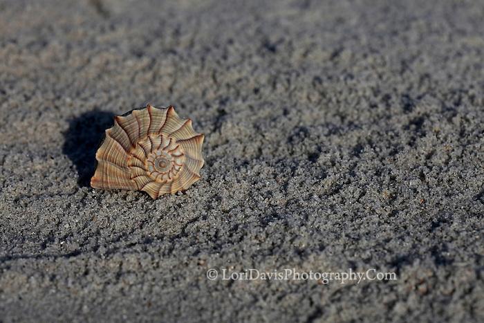 Shell On The Beach 3
