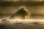 "Pictured:  The waves forming the shape of a sea horse<br /> <br /> A sea horse, wolf and lion appeared in blasts of spray as huge waves crash against a pier.  As the storm raged, giant walls of water battered the coastline and erupted in clouds above the pier, forming shapes of animals in the mist.<br /> <br /> Stephen Grant, 60, who lives in Porthcawl, Wales, with his wife Kath, caught all the images on the same morning in the seaside town.  He said: ""Storms occur throughout the year especially when the winds are blowing south-south westerly with gusts reaching up to 30mph to 40mph that cause big swells, throwing the waves over the pier, peaking at times to 20ft to 30ft high.  SEE OUR COPY FOR DETAILS.<br /> <br /> Please byline: Stephen Grant/Solent News<br /> <br /> © Stephen Grant/Solent News & Photo Agency<br /> UK +44 (0) 2380 458800"