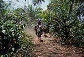 Osa Peninsula, Costa Rica. Local man on horseback leading other horses on a trail through the forest.