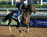 ARCADIA, CA - NOV 02: Flintshire, owned by Juddmonte Farms, Inc. and trained by Chad C. Brown, exercises in preparation for the Breeders' Cup Longines Turf at Santa Anita Park on November 2, 2016 in Arcadia, California. (Photo by Kazushi Ishida/Eclipse Sportswire/Breeders' Cup)