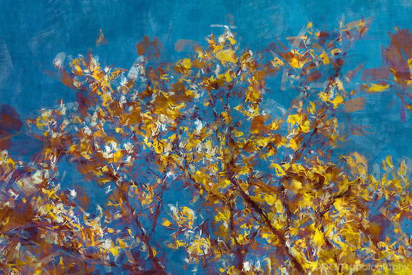 Painterly image of fall leaves on an aspen tree.