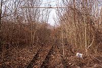Milano, periferia nord. Ex scalo merci ferroviario Farini. Rotaie, binari in disuso dispersi nella vegetazione --- Milan, north periphery. Freight railway yard Farini. Abandoned tracks lost in the vegetation