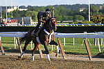 June 6, 2014: Commanding Curve exercises at Belmont Park as horses prepare for the Belmont Stakes in Elmont, New York. California Chrome and racing fans are awaiting his attempt to be the first Triple Crown winner in 36 years. Zoe Metz/ESW/CSM