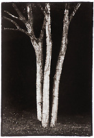 This is a Platinum Palladium print on Velum over silver leaf. <br /> Image size  23 x 15 cm