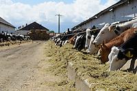 ROMANIA Transilvania, Voila, milk cow farm of CarmOlimp / RUMAENIEN Siebenbuergen, Voila, Milchviehbetrieb CarmOlimp