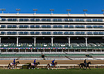 October 29, 2018 : Line of Duty (IRE), La Pelosa (IRE), and Wild Illusion (GB), trained by Charlie Appleby, on the turf course at Churchill Downs on October 29, 2018 in Louisville, Kentucky. Evers/ESW/CSM