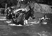 Mule skinners attached to 2nd Bn., 475th Inf. Regt., Mars Task Force, stripped down to their bare skin to lead mules through the swift river that impeded their progress to Bhamo, Burma, November 17, 1944.  S. Sgt. Quaid.  (Army)<br /> NARA FILE #:  111-SC-197939<br /> WAR & CONFLICT BOOK #:  1156