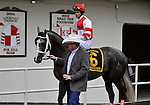 29 November 2008: Ramon Dominguez gets instructions from trainer Larry Jones in the paddock before riding Old Fashioned to an easy wire to wire victory in the grade 2 Remsen Stakes at Aqueduct Racetrack in Ozone Park, New York.