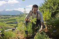 Europe/France/Rhône-Alpes/73/Savoie/Jongieux: Michaël Arnoult chef du  Restaurant: Les Morainières dans son potager [Non destiné à un usage publicitaire - Not intended for an advertising use]