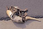 Dead Nine-banded Armadillo On Roadside