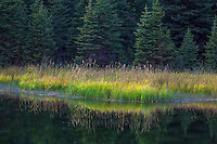 A pond reflects the landscape near Grand Teton National Park, Wyoming
