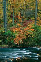 Northern hardwood forest along the <br />    Gunpowder Falls River<br /> Gunpowder Falls State Park<br /> Baltimore County,  Maryland