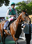 Mainsail (no. 1), ridden by Christophe Soumillon and trained by Pascal Bary, wins the group 3 Prix Bertrand du Breuil for four year olds and upward on June 16, 2013 at Chantilly Racecourse in Chantilly, France.  (Bob Mayberger/Eclipse Sportswire)