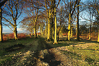 Cathkin Braes woodland, Cathkin Braes Country Park, Glasgow<br /> <br /> Copyright www.scottishhorizons.co.uk/Keith Fergus 2011 All Rights Reserved