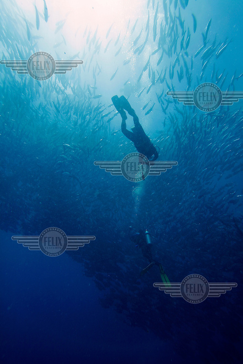 Sipadan island is known as one of the worlds top diving destinations. The abundance of turtles in particular is amazing, but seeing sharks and  big schools of Barracuda or Jackfish is also virtually guaranteed.