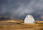 Gallatin County, MT: Sunlight on white barn with sleet falling from dark storm clouds and distant rainbow