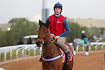 RIYADH, SA February 19 2021: OXTED (GB) Track work from King Abddulaziz Racetrack, Riyadh, Saudi Arabia. Shamela Hanley/Eclipse Sportswire/CSM