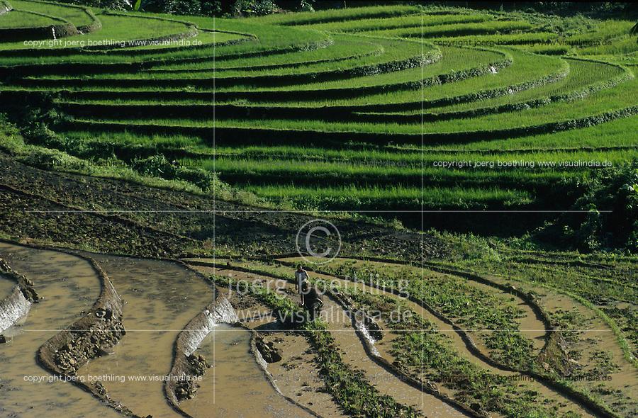PHILIPPINES, Negros, organic farming, farmer ploughs paddy terrace field with water buffalo in village Sitio Tabidiao / PHILIPPINEN, Negros, biologischer Reisanbau, Bauer pfluegt Reisfelder in Terrassen mit Wasserbueffel