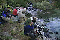 A photo of a group photographers photographing a grizzly bear in Alaska. Grizzly Bear or brown bear alaska Alaska Brown bears also known as Costal Grizzlies or grizzly bears Grizzly Bear Photos, Alaska Brown Bear with cubs. Purchase grizzly bear fine art limited edition prints here Grizzly Bear Photo Bear Photos,