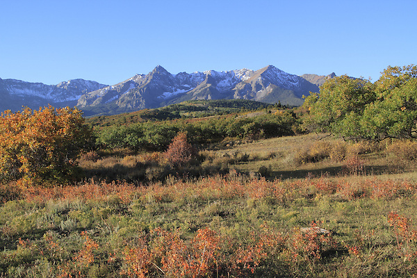 Sneffels Range with Aspen trees in autumn colors.