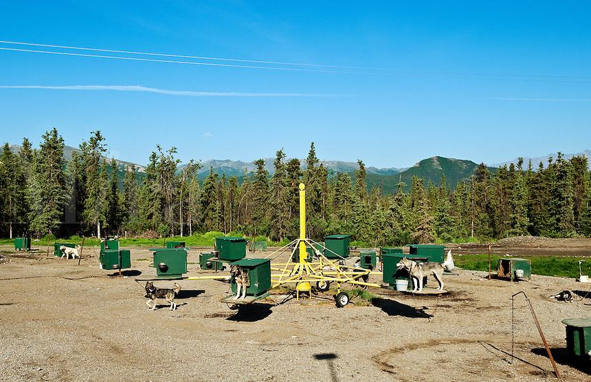 Jerff King's Huskey Homestead Kennel, Denali, Alaska