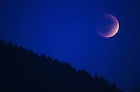 Lunar Eclipse over forest, Zug, Switzerland,