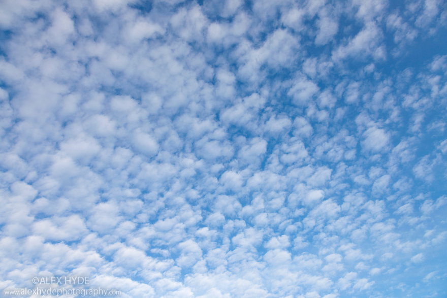 Altocumulus clouds, UK.