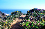 Hiking trails near Morro Bay in spring yeilds wonderful seascape and wildflower experiences.  This trail, near the head of Morro Spit, begins in Montana de Oro State Park.