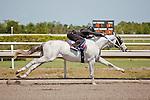 #101.Fasig-Tipton Florida Sale,Under Tack Show. Palm Meadows Florida 03-23-2012 Arron Haggart/Eclipse Sportswire.
