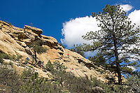 Photo story of Philmont Scout Ranch in Cimarron, New Mexico, taken during a Boy Scout Troop backpack trip in the summer of 2013. Photo is part of a comprehensive picture package which shows in-depth photography of a BSA Ventures crew on a trek.  In this photo BSA Venture Crew Scouts climb the natural surface of the rock face at Dean Cow Camp, in the backcountry at Philmont Scout Ranch.   <br /> <br /> The  Photo by travel photograph: PatrickschneiderPhoto.com