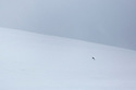 Mountain Hare (Lepus timidus) on snow-covered mountainside, Cairngorms National Park, Scotland. January.