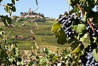Vigneti dei signori Franchini presso Montescano (Pavia) nell'Oltrepò Pavese. Sullo sfondo il castello di Cigognola --- Franchini's vineyards near Montescano (Pavia) in the Oltrepò Pavese. On the background the castle of Cigognola