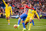 Atletico de Madrid Antoine Griezmann and UD Las Palmas Helder Lopes during La Liga match between Atletico de Madrid and UD Las Palmas at Vicente Calderon Stadium in Madrid, Spain. December 17, 2016. (ALTERPHOTOS/BorjaB.Hojas)