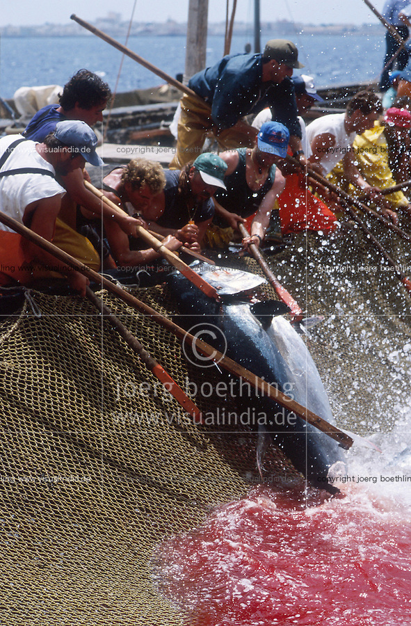 ITALY, fishermen of cooperative La Mattanza catch red tunafish by an old tradional method in fish traps at island Favignana near Trapani Sicily, in the death chamber the tuna is harpooned / ITALIEN, Fischer der Kooperative La Mattanza fangen und toeten Rotflossen Thunfisch mit Reusen vor der Insel Favignana bei Sizilien, der Fisch wird zu hohen Preisen auf Auktionen in Japan verkauft - More images available!