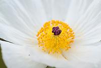 Spring 2012, South and Central Texas.<br /> <br /> Canon EOS 5D II, Tonina 100mm macro lens