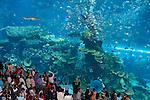 United Arab Emirates, Dubai: Dubai Mall, worlds largest shopping mall, The Aquarium