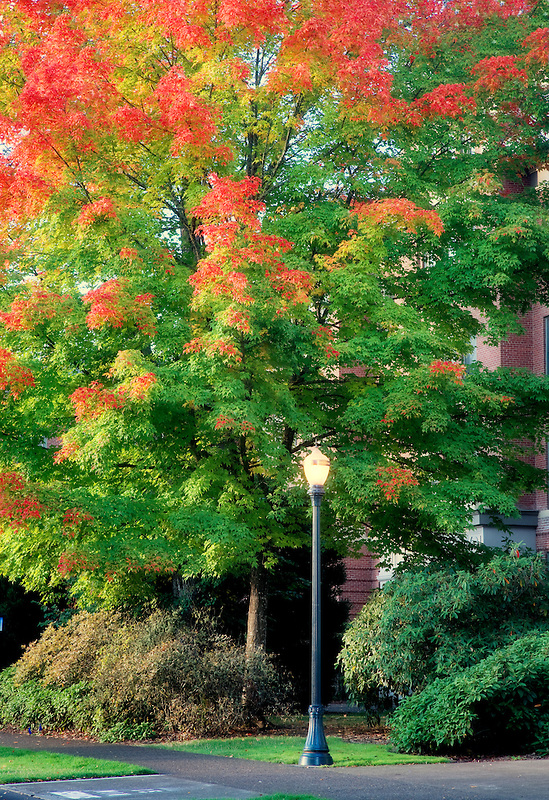 Lamp and fall colored tree . Oregon State University.