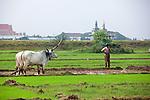 Oxen & Farmer