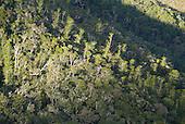Forêt du Pic du Pin