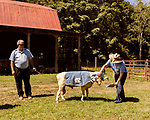 July 31, 2017. Chapel Hill, North Carolina.<br /> <br /> Ginger Holler feeds Rameses the Ram with her husband Don Basnight.<br /> <br /> Basnight is one of the members of the Hogan family who have long been the caretakers of Rameses the Ram. The current Rameses is the 21st in the line of the University of North Carolina's live mascot.