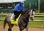 LOUISVILLE, KY - APRIL 23: Mohaymen (Tapit x Justwhistledixie, by Dixie Union) on track with exercise rider Miguel Jaime, Churchill Downs, Louisville KY, preparing for the Kentucky Derby. Owner Shadwell Stable, trainer Kieran McLaughlin. (Photo by Mary M. Meek/Eclipse Sportswire/Getty Images)