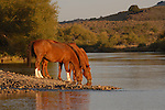 TWO HORSES TAKING DRINKS FROM THE WATER