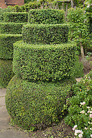 Pruned Buxus boxwood shrubs in topiary shapes