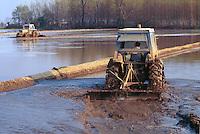- cultivation of the rice in province of Novara....- coltivazione del riso in provincia di Novara