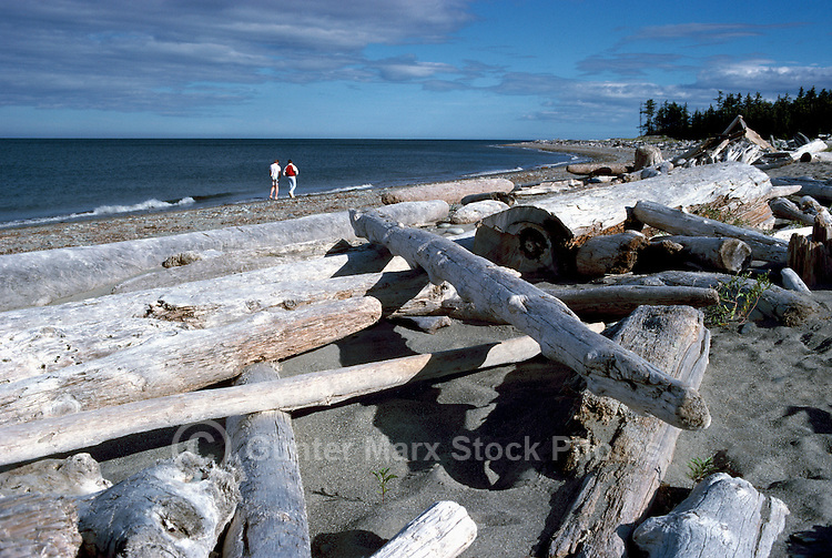 Haida Gwaii (Queen Charlotte Islands), Northern BC, British Columbia, Canada - Hiking on North Beach in Rose Spit Ecological Reserve along McIntyre Bay, Naikoon Provincial Park, Graham Island