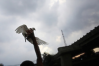 Indonesian men racing pigeons in a slum community in central Jakarta.