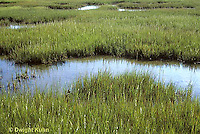 1G06-018a  Cord Grass - short form, high salt marsh, Atlantic Coast  - Spartina alterniflora